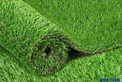 cỏ golf green